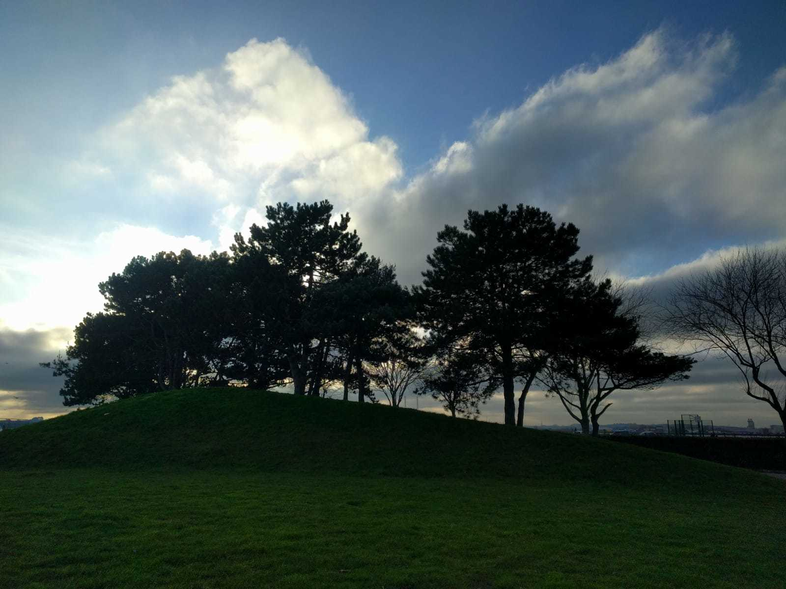 trees in Mayflower Park, Southampton