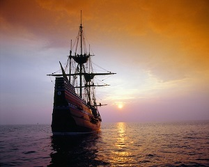 Mayflower Sunset crop