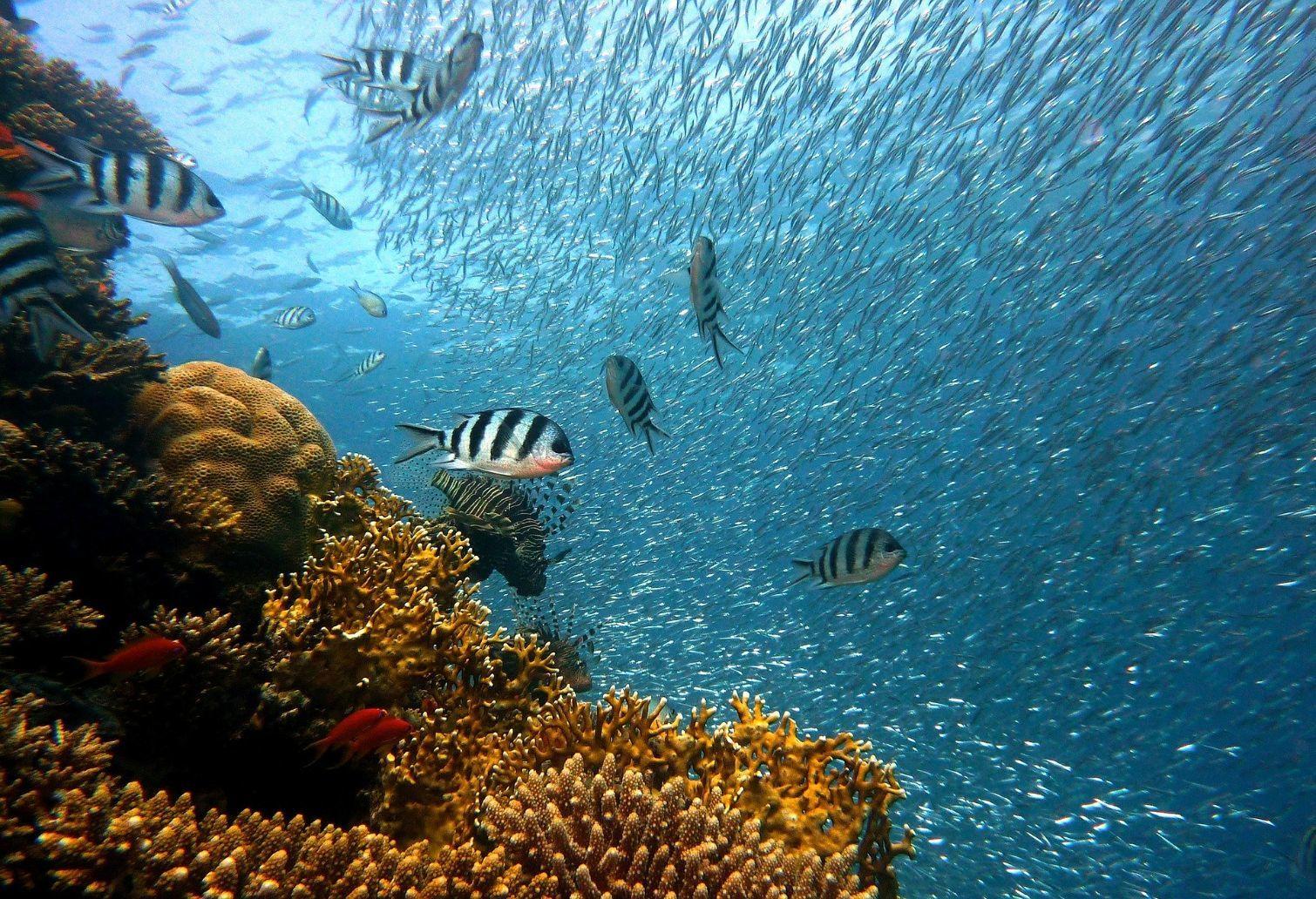 Fish in the sea 1